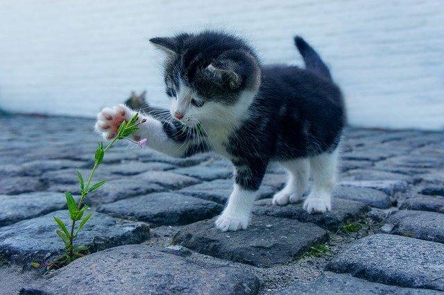 kotě u klíčící rostlinky